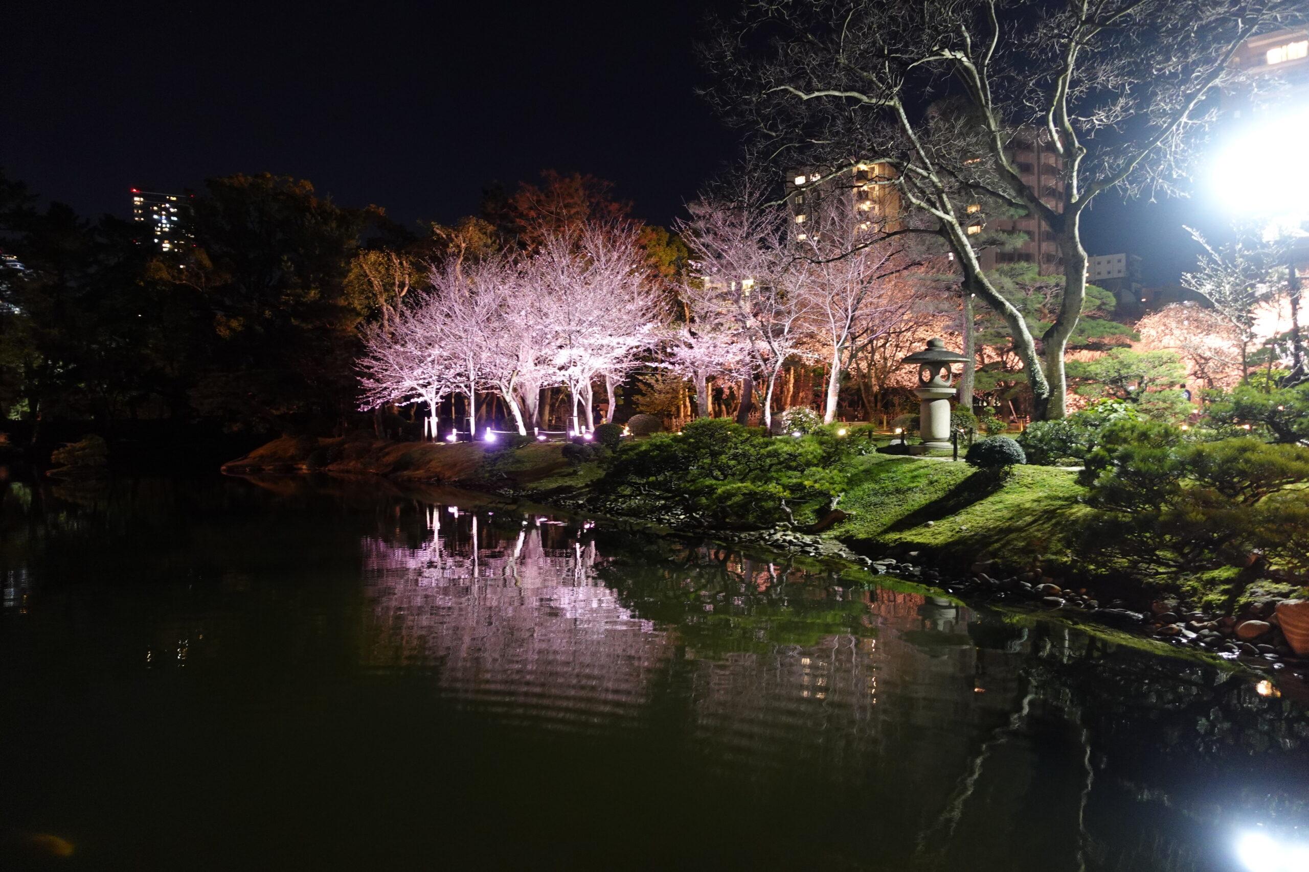 夜桜ライトアップ2021